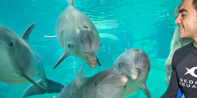 Bottlenose Dolphins And