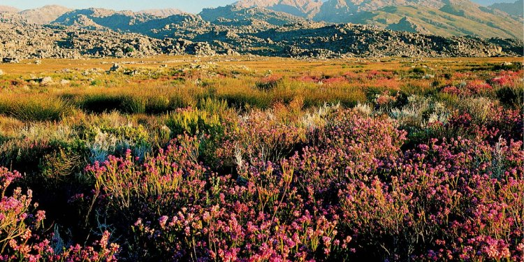 Cape Floral Region Protected