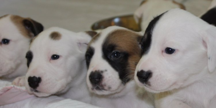 Help Orphan Puppies