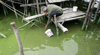 ** FILE ** A fisherman fetches water affected by blue-green algae in Lake Tai, in Wuxi, China's Jiangsu province in this June 2, 2007 file photo. Wu Lihong had warned for years that pollution was strangling his beloved Lake Tai. Yet when a disastrous algae bloom fed in part by pollution forced a lakeside city to shut off its drinking water, the salesman-turned-environmental campaigner had little chance of savoring his vindication. (Source: AP)