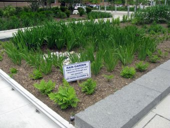 Rain garden in Washington, DC